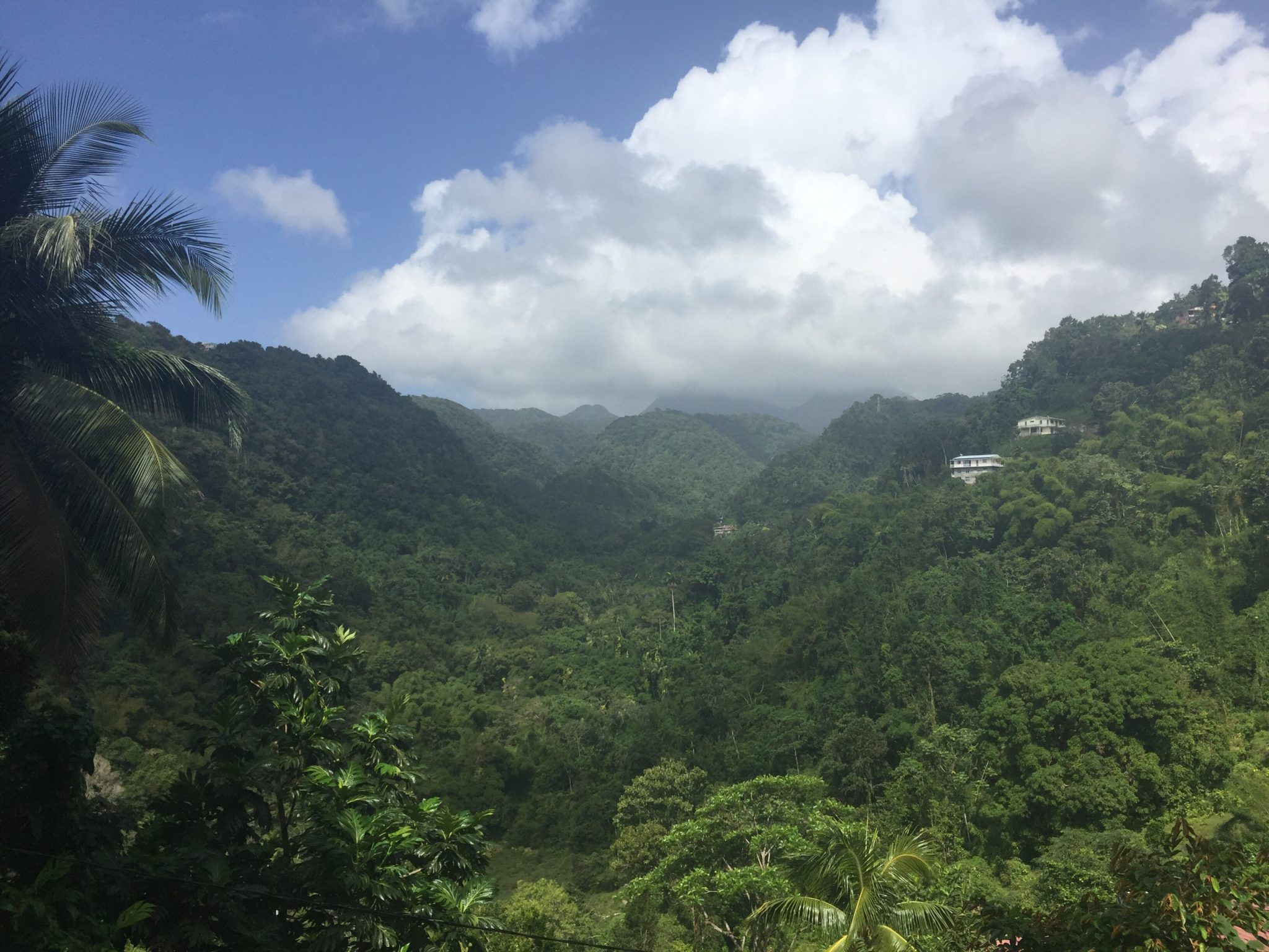 Sustainable Guide to Martinique